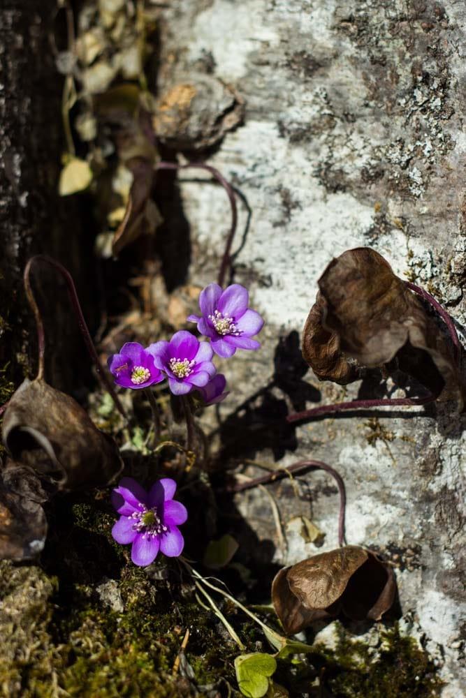 Blumen am Wegesrand Achensee - lenasfoodforfriends