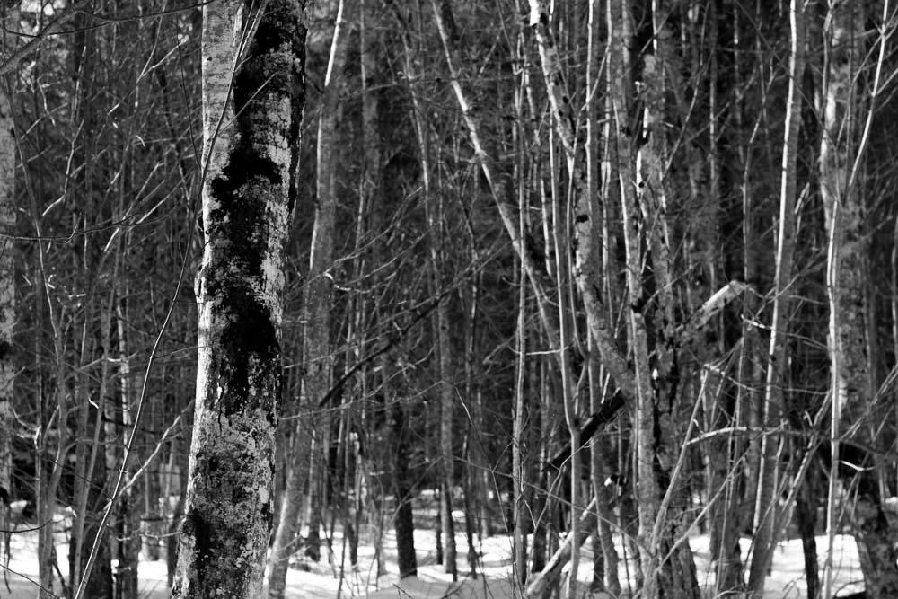 Wald im Winter Achensee